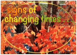 fall-tree-pic02-2016-11-18-at-5-45-00-am